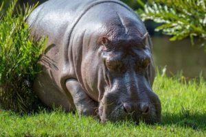 Der HIPPO-Effekt und wie man ihn umgeht